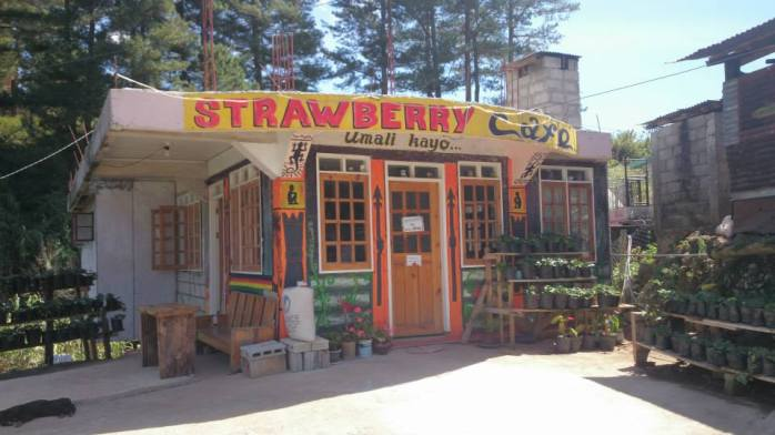Strawberry Cafe - our favorite and highly-recommended restaurant at Sagada, Mountain Province